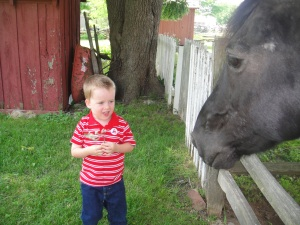 Levi liked the horse, but didn't want to touch it...