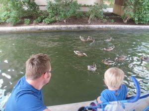 Ducks in OKC