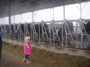 She LOVED the cows and wanted to go IN the pens with them...ha
