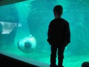 Levi liked the walrus