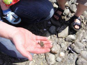 Crab found!
