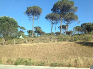 These strange trees are quite a different look than our Alpine home here in France.